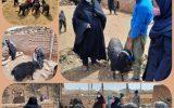 اجرای  پروژه ملی اهدابزکرکی درصندوق های خرد زنان دربخش مود شهرستان سربیشه