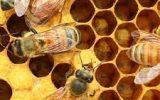 رتبه اول تولید عسل در شهرستان مشهد
