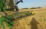 برداشت ۲۵ هزار تن گندم از مزارع شهرستان جغتای